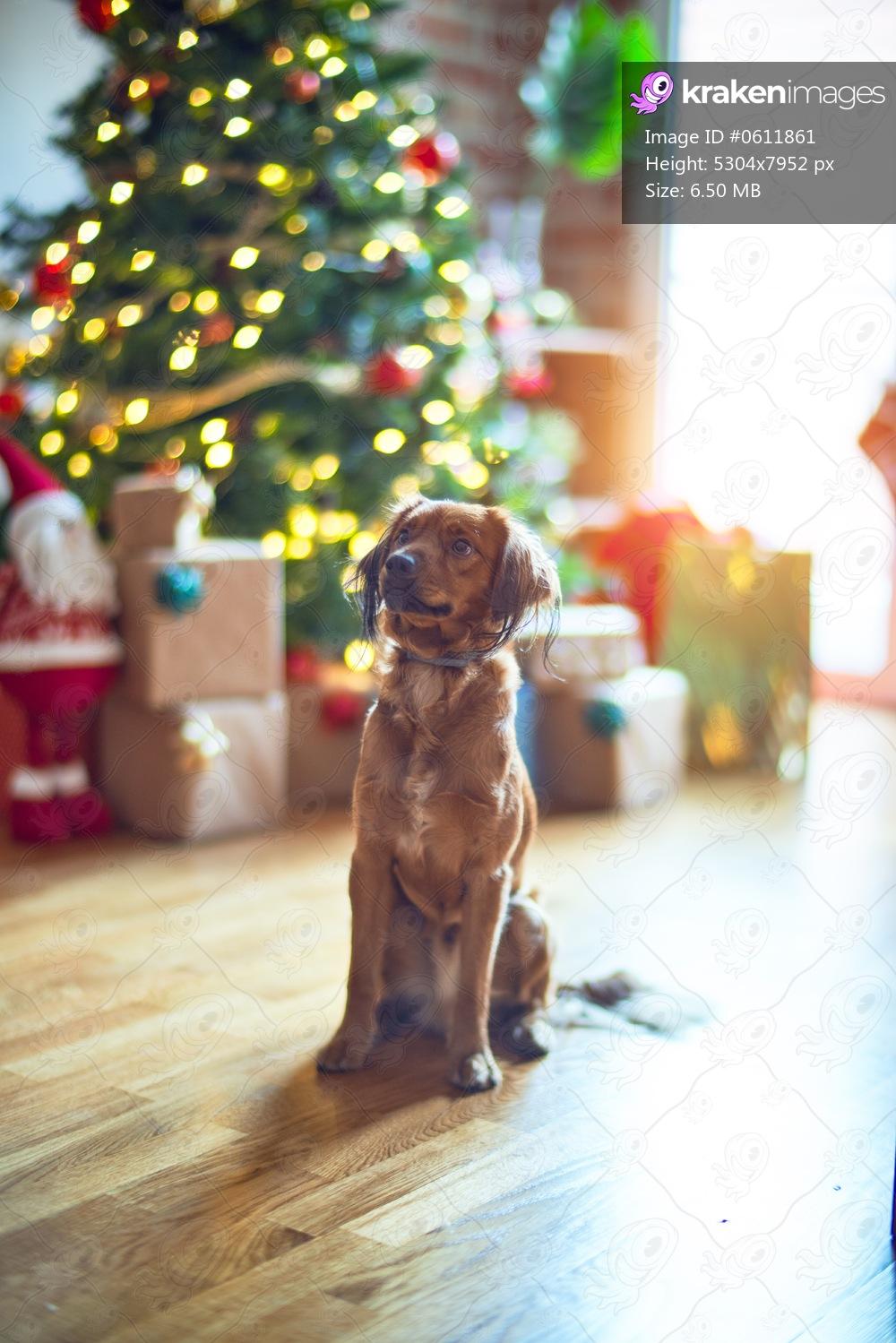 Adorable dog around christmas tree at home